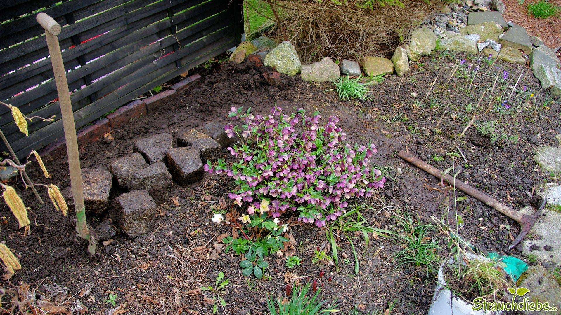 Projekt Pampasgras (Cortaderia selloana)