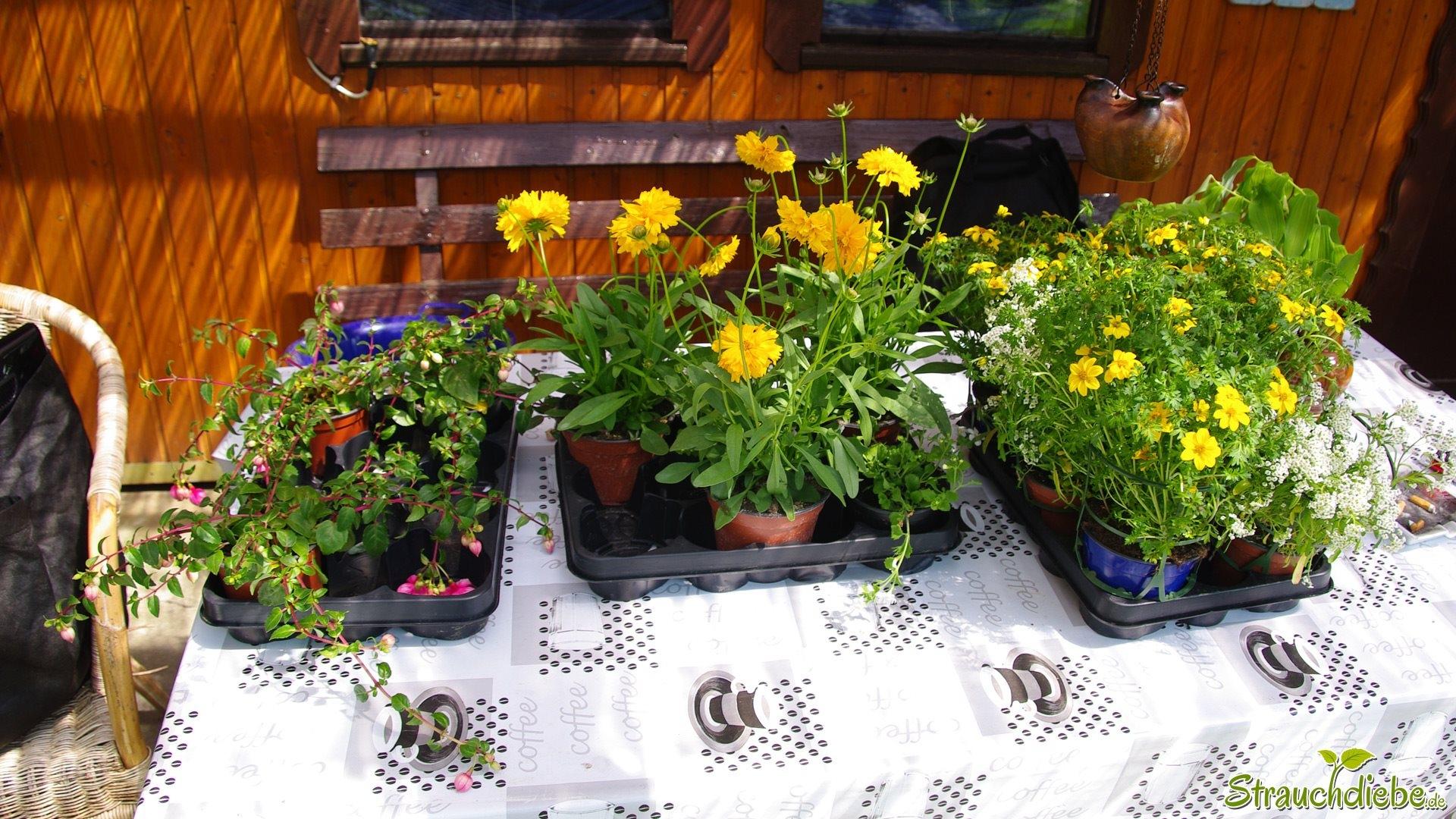 neue Pflanzen für den Garten