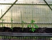 Tomatenzelt