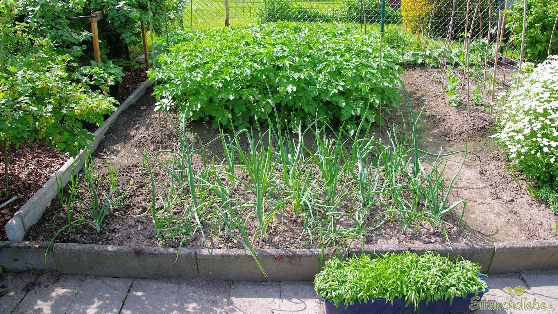 Nutzpflanzen