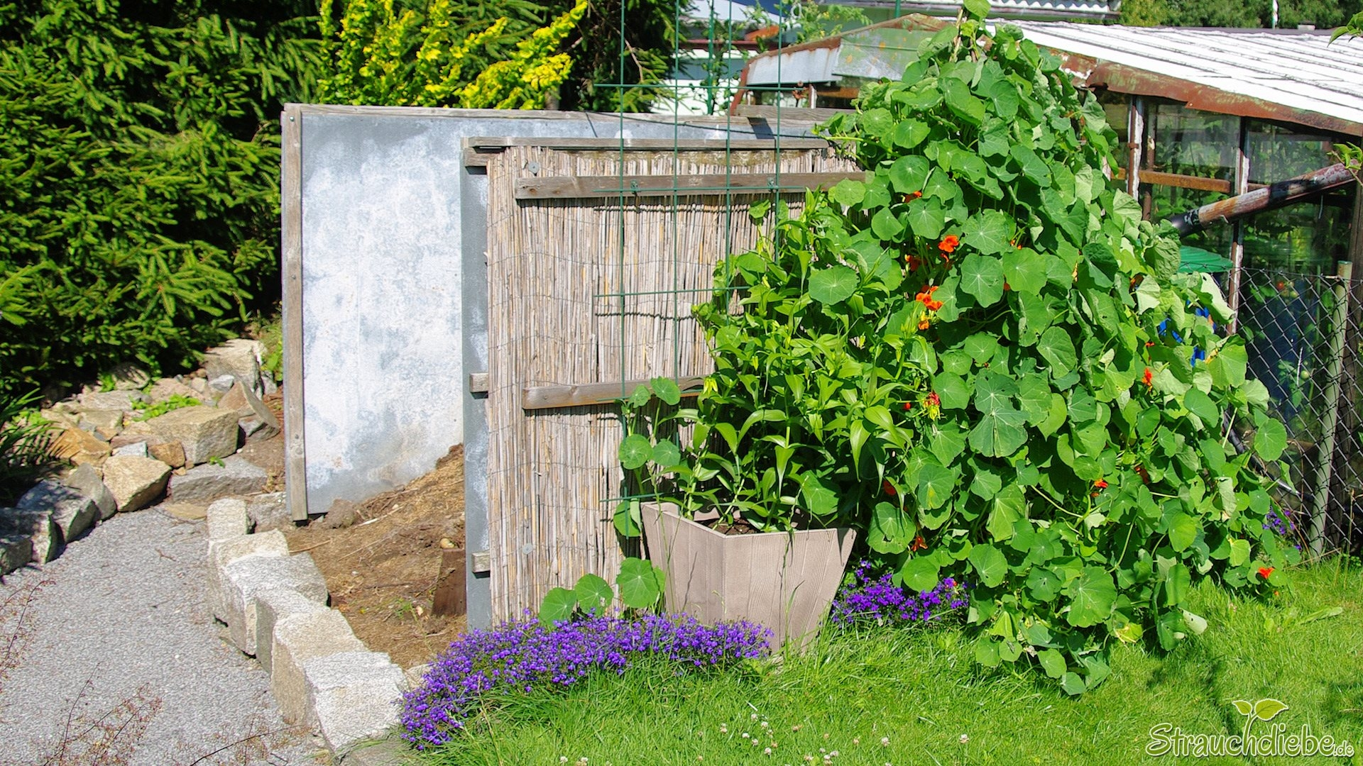 M nnertreu strauchdiebe - Gartenarbeiten im mai ...