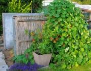 Kompostbeet