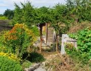Projekt Miniwald