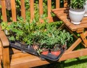Pflanzennachwuchs