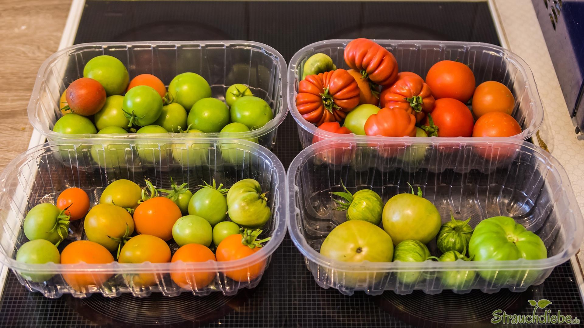 letzte Tomatenernte