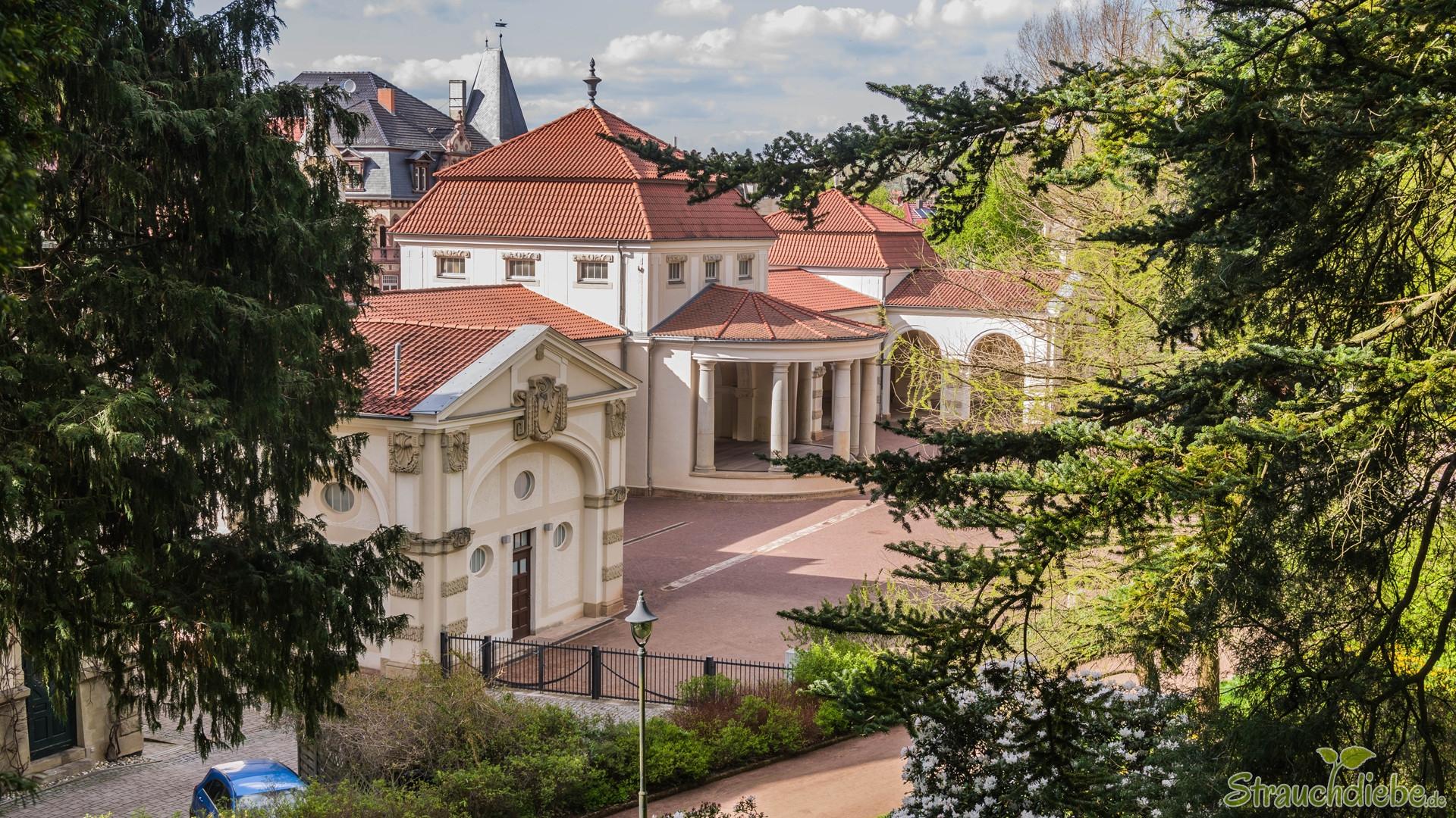 Kartausgarten (Eisenach)