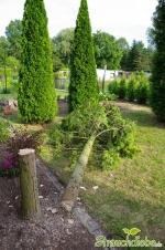 Baum fiel