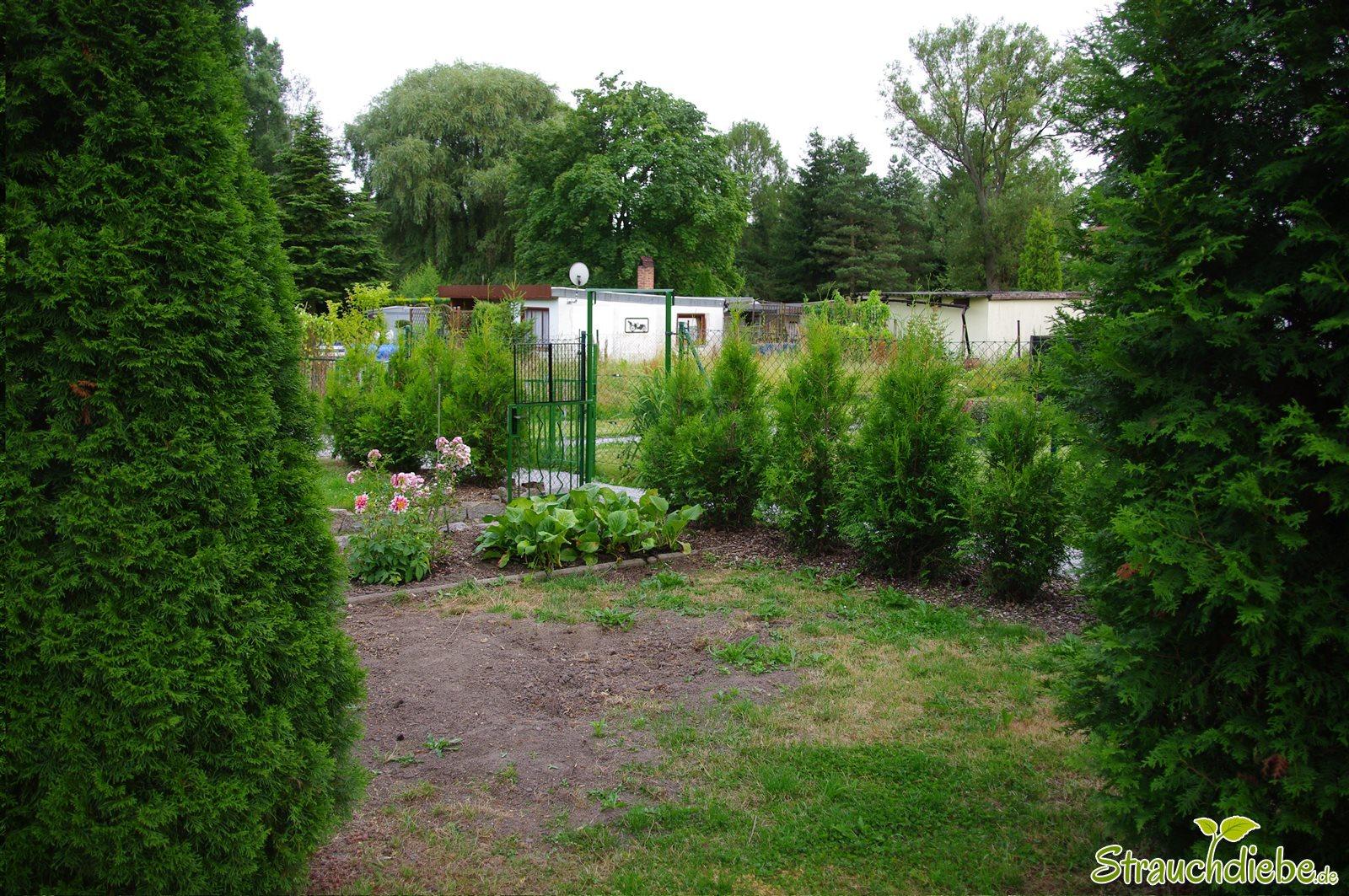 Blick zum Gartentor 2