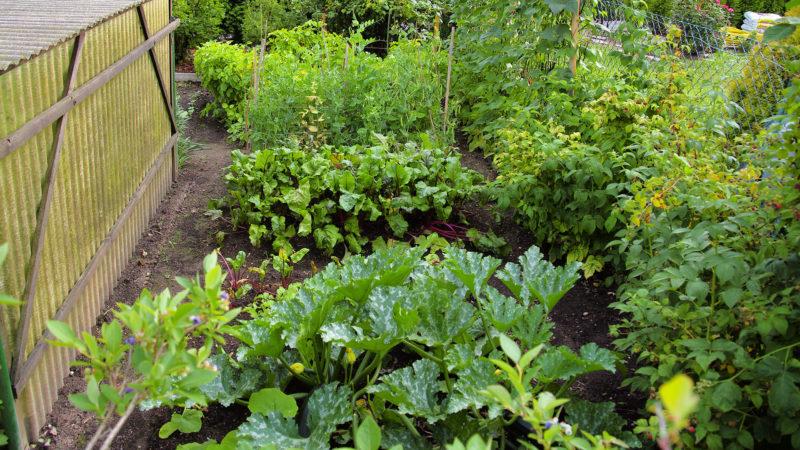 Gemüsebeete
