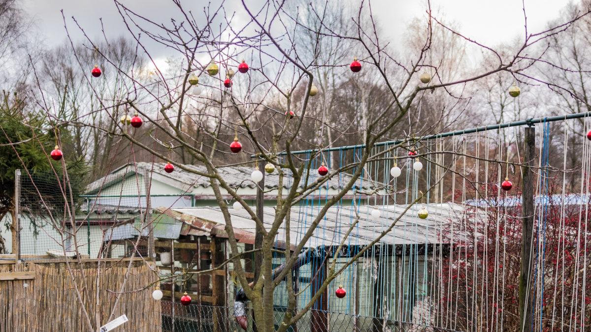weihnachtlich dekorierter Sauerkirschbaum